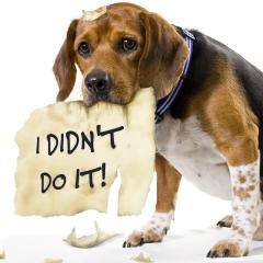 http://enviralment.files.wordpress.com/2009/08/dog-ate-my-homework.jpg?resize=240%2C240